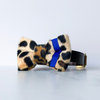Leopard and blue neon dog bow tie in small