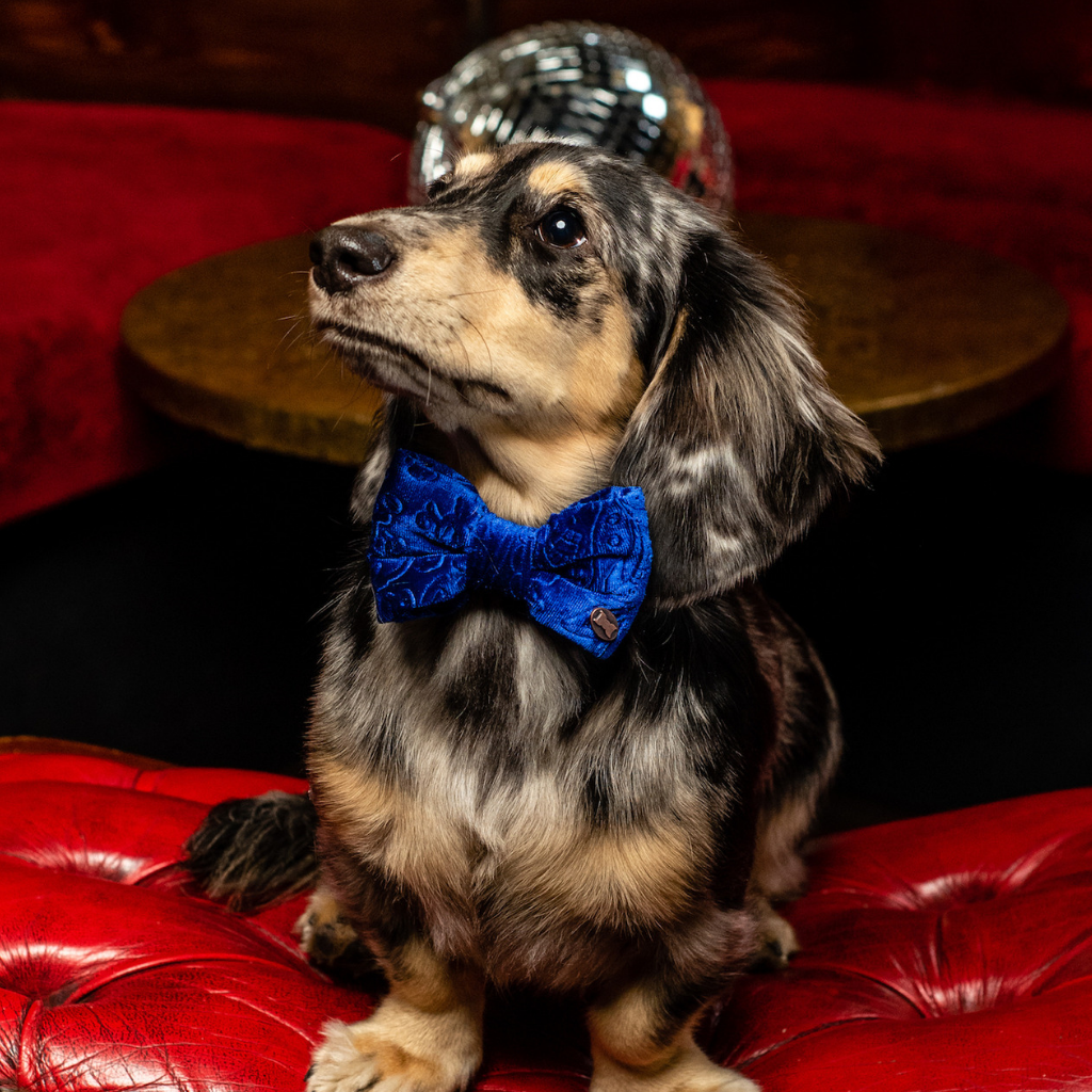 Ballsy Blue Embossed Velvet Dog Bow Tie
