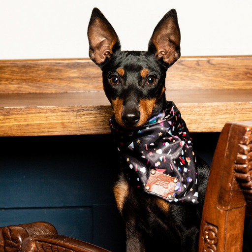Miniature pincer wearing confetti neckerchief