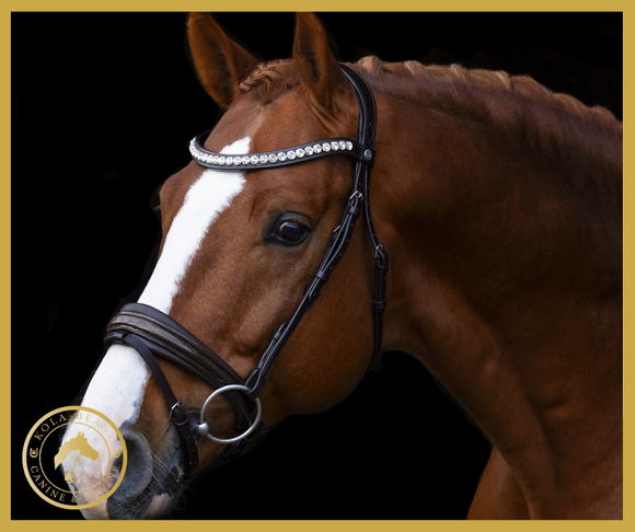 Anatomic Bridle Collection at Kola-Beanz