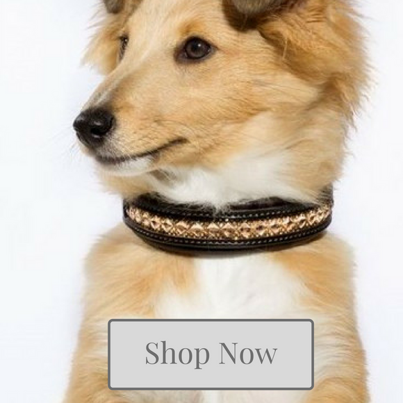 Dog Collar Collection - Kola-Beanz