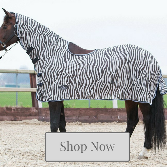 Fly Rug Collection at Kola-Beanz