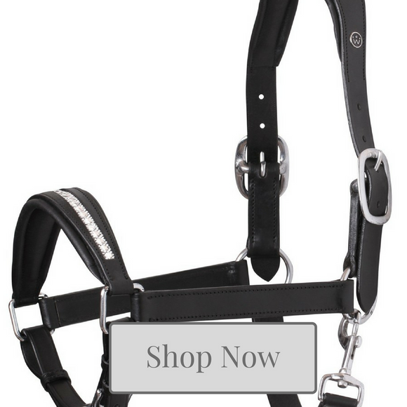Equestrian gifts over €40 at Kola-Beanz