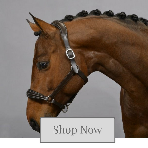 Horse headcollar collection - Kola-Beanz