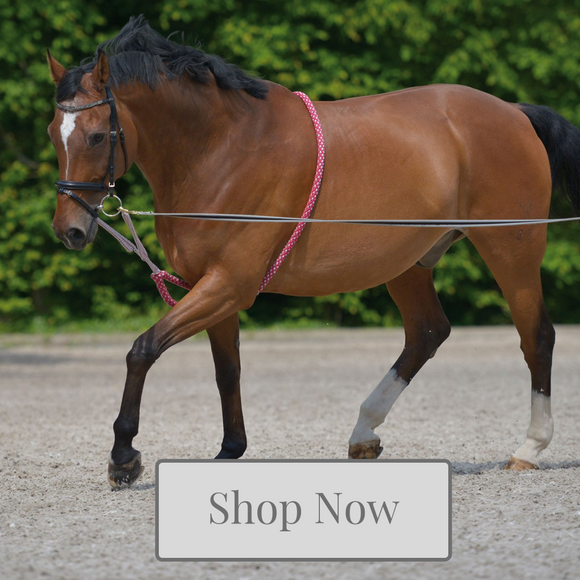 Lunging and training aid collection at Kola-Beanz
