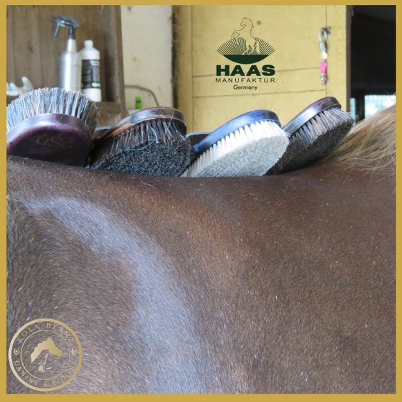 Light Bay/Chestnut Horse Essential Grooming Kit with HAAS Brushes
