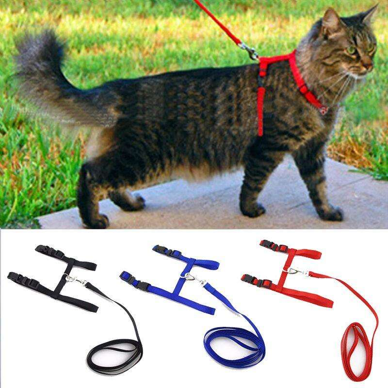 Charlie Buddy - Hand picked products for your dogs and cats-Cat Collar Harness And Leash
