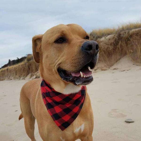 Charlie Buddy - Hand picked products for your dogs and cats-Cotton Trendy Lumberjack Dog Bandana