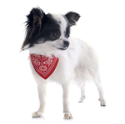 Charlie Buddy - Hand picked products for your dogs and cats-Cowboy Style Pet Bandanas (Various Colors & Patterns)