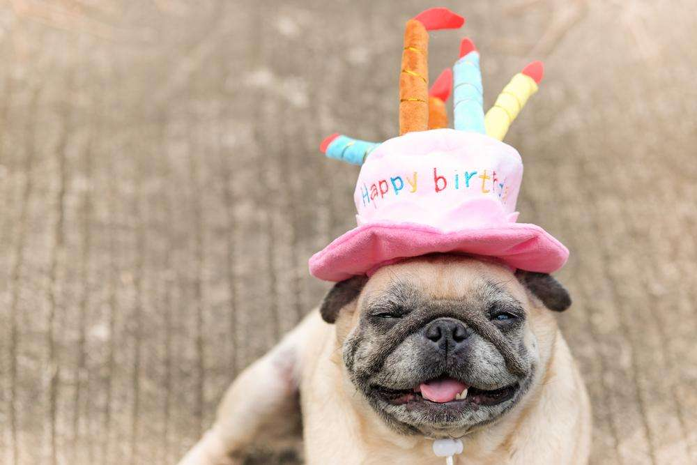 Charlie Buddy - Hand picked products for your dogs and cats-Happy Birthday! Dog Hat