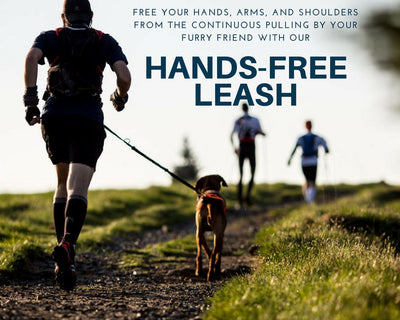 Dog Road Runner Hands-Free Leash