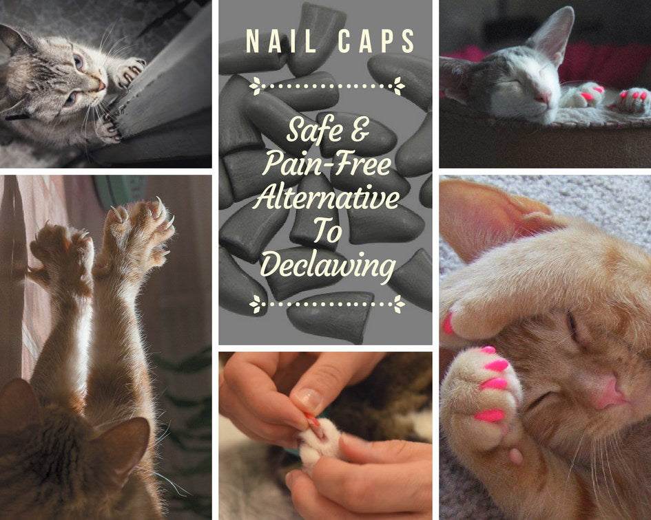 Colorful Soft Silicone Cat Nail Caps (20pcs)