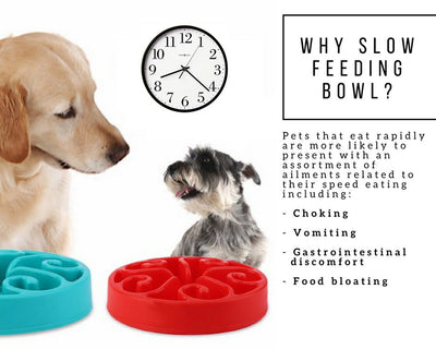 Slow Feeding Pet Bowl