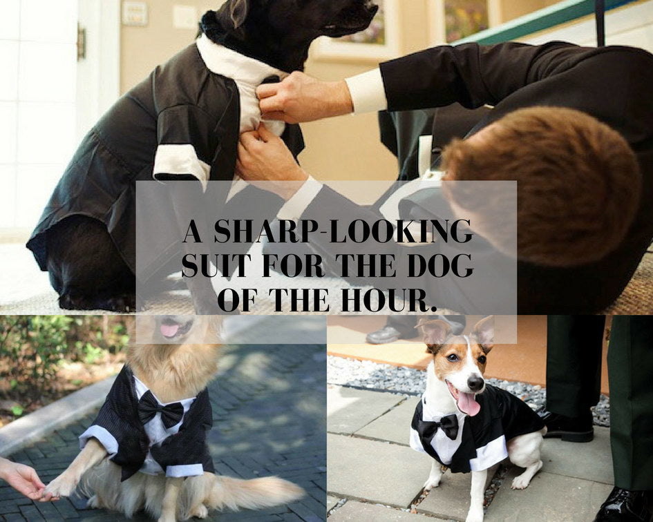 Dog Tuxedo Overall With Tie for Special Events