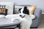 WICKEDBONE: World's First Smart & Interactive Dog Toy - Exclusively on Charlie Buddy!