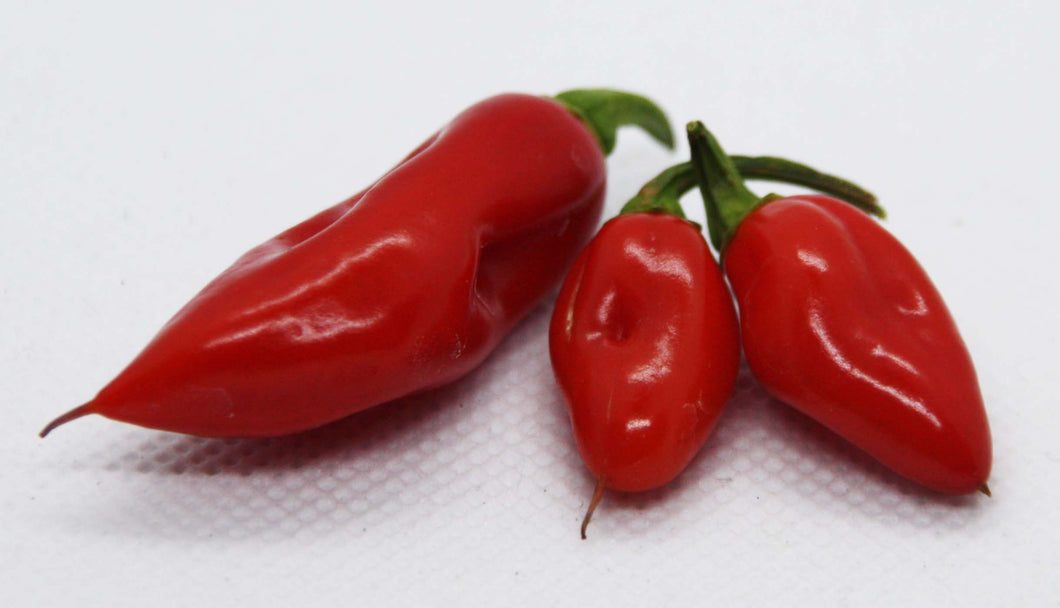 Isolerte Bhut Jolokia Purple chilifrø