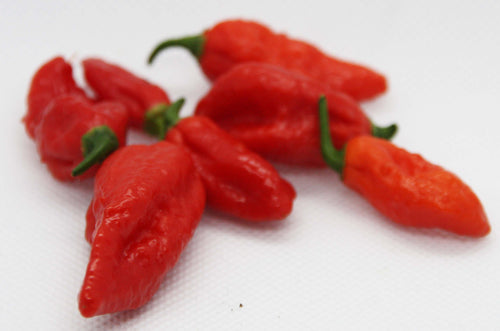 Bhut Jolokia (Ghost Pepper) chilifrø