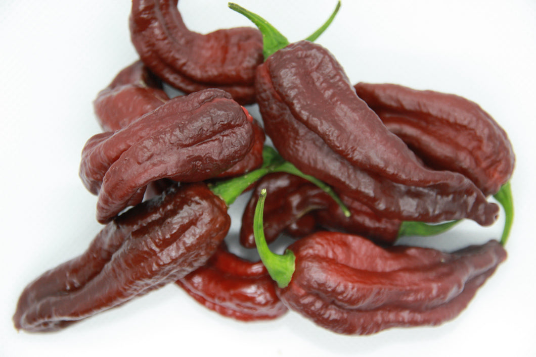 Fatalii Chocolate chilifrø