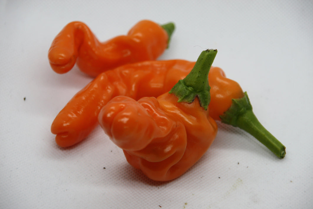 Forhåndsbestill Penis Pepper Orange chiliplante