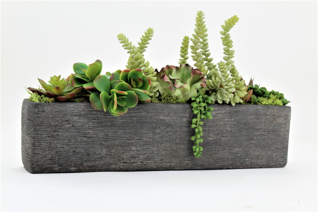 Succulents Garden in Large Rectangle Box