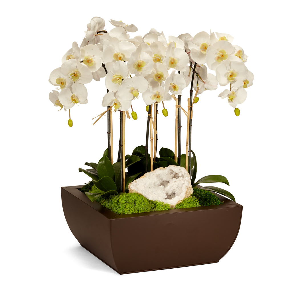 Orchid in Metal Box - White