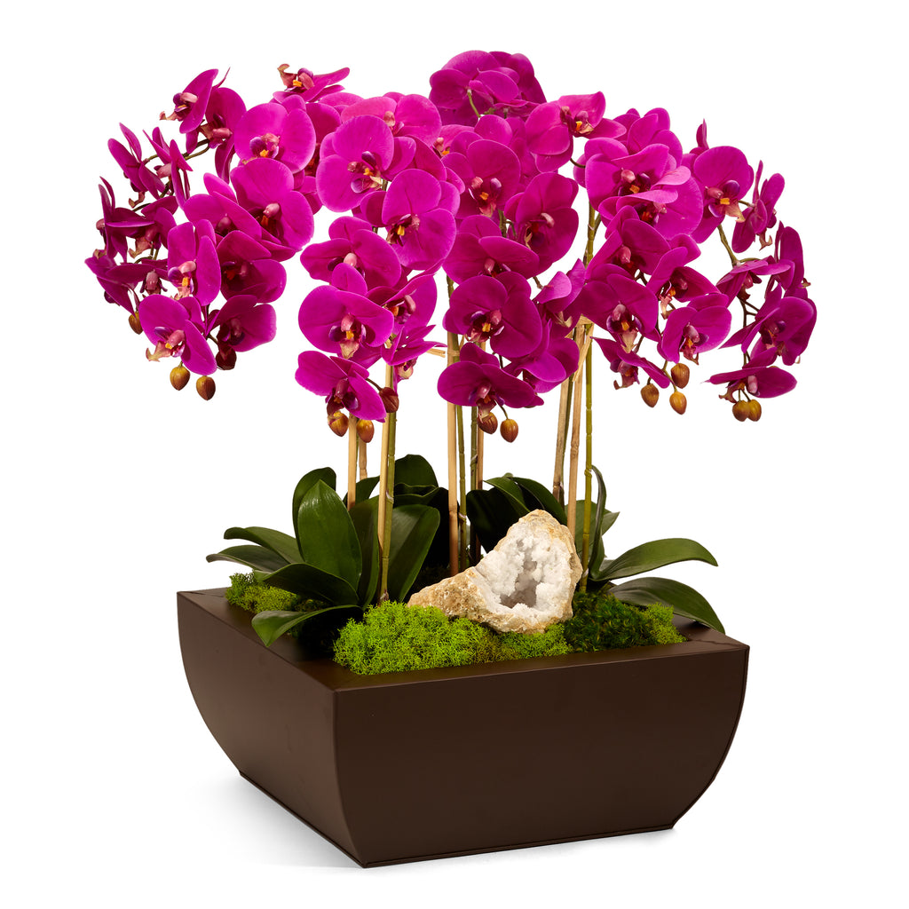 Orchid in Metal Box - Fuschia