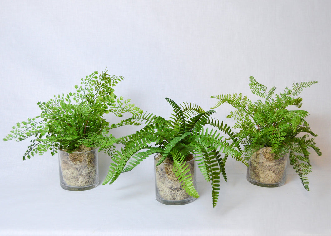 Fern Pack  - Set of 3