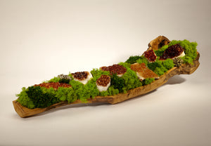 Organic Moss Garden in Hand Carved Wood Log - Citrine