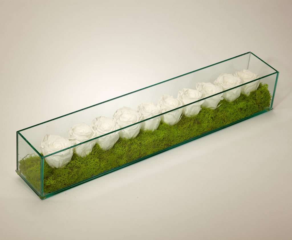 Preserved Roses in Rectangle Glass Box - PWH