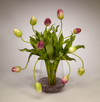 Tulips in Clear Glass Vase - PUR/GR