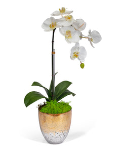 Single Orchid in Champagne Vase