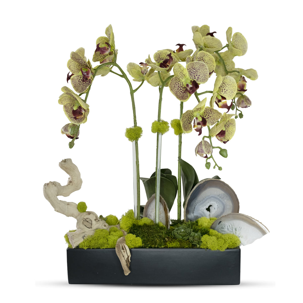 Orchids in Rectangle Ceramic Container