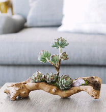 Load image into Gallery viewer, Baby Wood Log with Sedums
