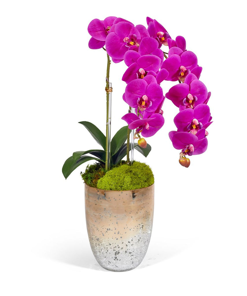Double Orchid in Champagne Container