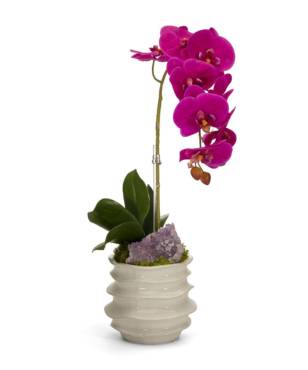 Orchid in White Wavy Pot