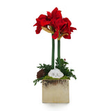 Red Double Amaryllis