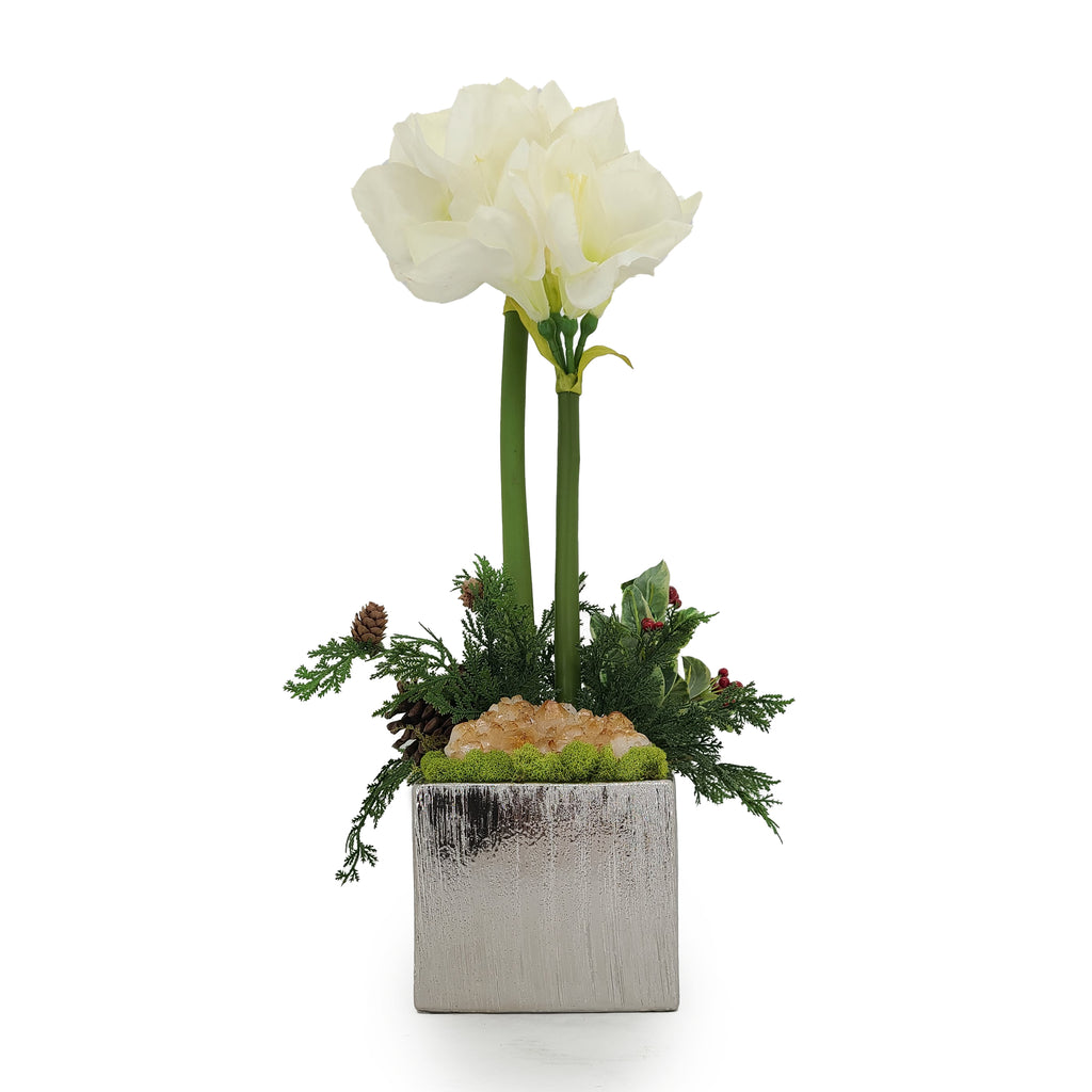 White Double Amaryllis