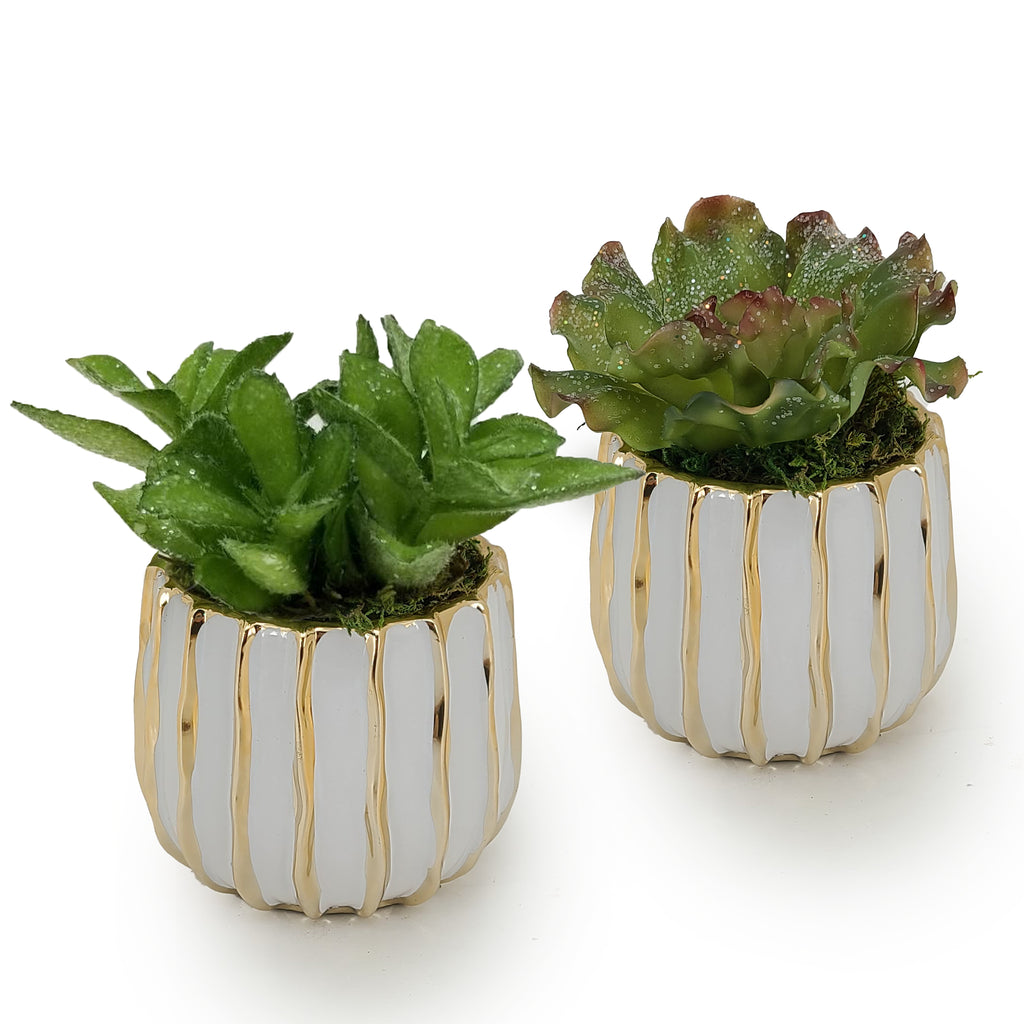 Holiday Succulents - Set of 2