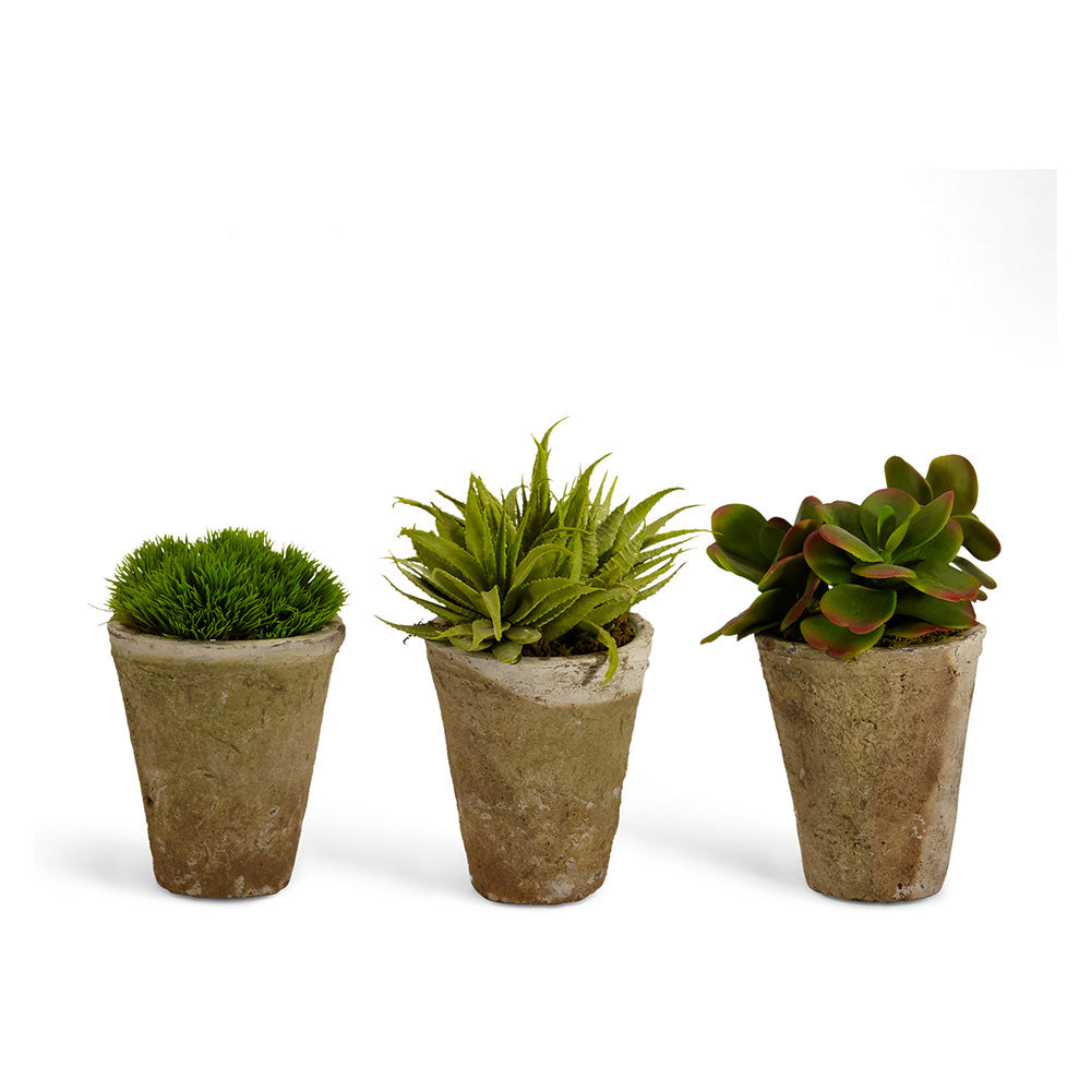 Succulents in Large Pots - Set of 3