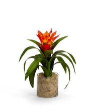 Load image into Gallery viewer, Bromeliad in Clear Glass Jar