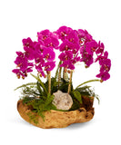 Orchids in Wood Bowl