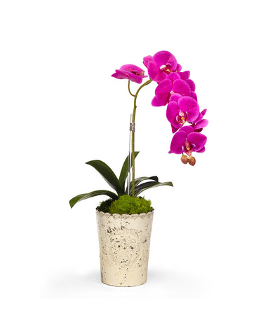 Single Orchid in Vintage Glass Vase
