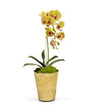 Load image into Gallery viewer, Orchid in Gold Vintage Vase