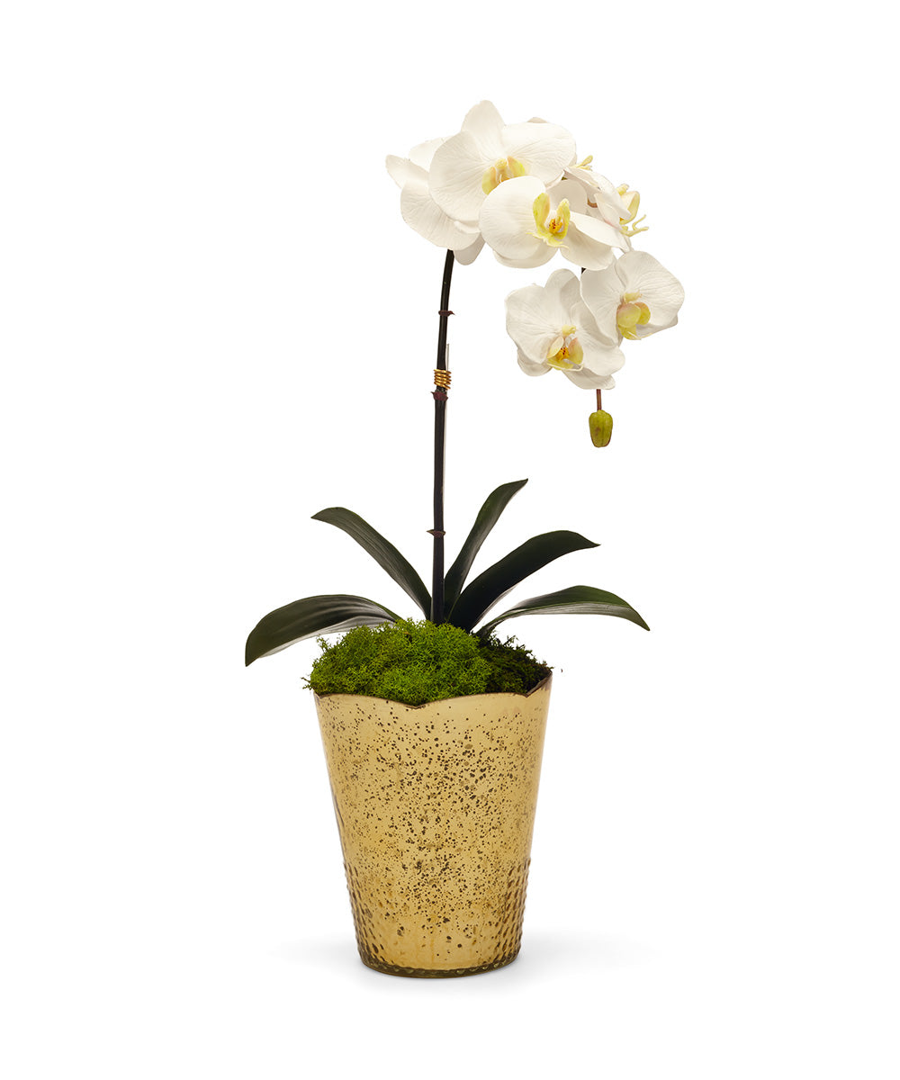 Orchid in Gold Vintage Vase
