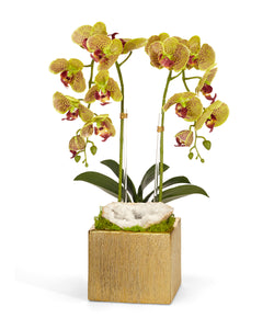 Double Orchid in Gold Square