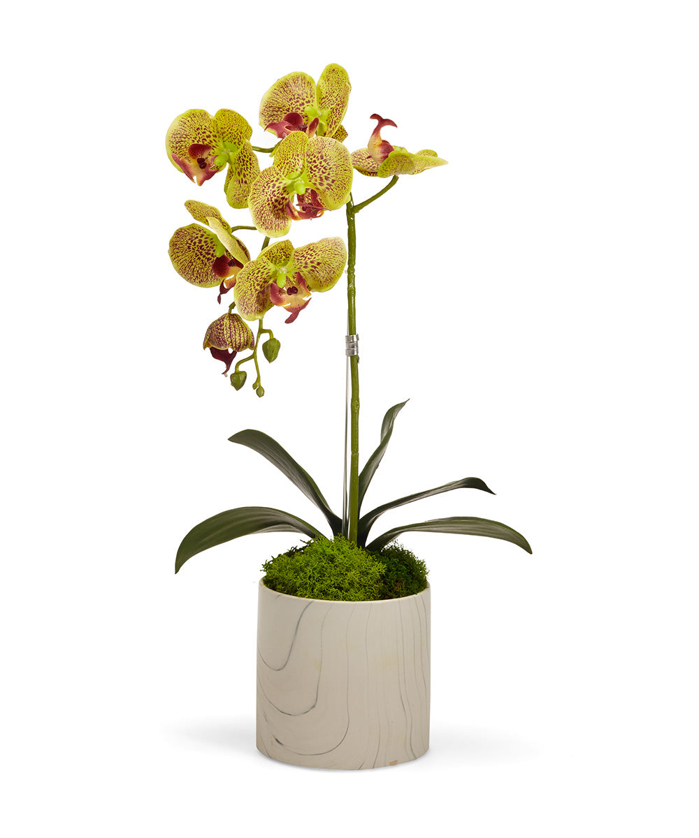 Single Orchid in White Marble Container