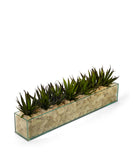 Agave in Rectangular Glass