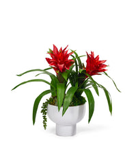 Load image into Gallery viewer, Bromeliad in a Unique Contemporary Container