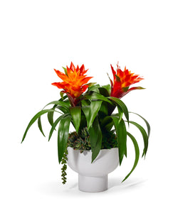 Bromeliad in a Unique Contemporary Container