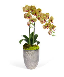 Double Orchid In Silver Glass Container
